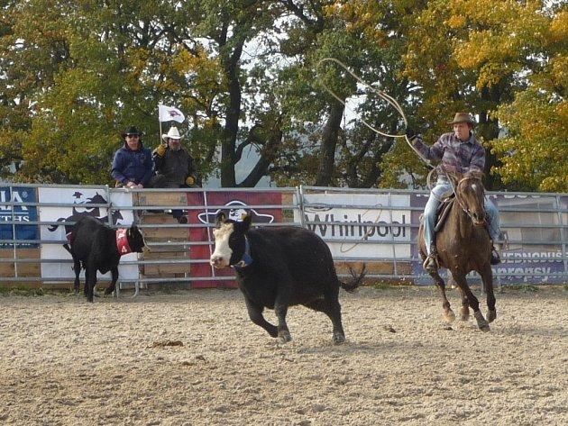 Finále Black Angus Championship 2013 ovládlo o víkendu Mitrovský dvůr na Bystřicku. Nejlepší jezdci se utkali například v disciplíně ranch roping. Nechyběl slavnostní nástup všech účastníků závodů ani trhy s produkty z Vysočiny.