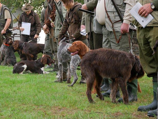 OBRAZEM: Lovečtí psi se předvedli při podzimních zkouškách