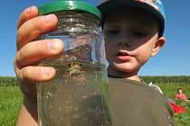 Děti i dospělí, vyzbrojeni síťkami všeho druhu, vyrazili v úterý 29. srpna v podvečer k rybníkům za sídlištěm Vodojem u Žďáru nad Sázavou. Odchytit se jim podařilo hned několik druhů vodních živočichů.
