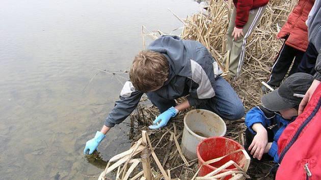 Mladí ochránci přírody Bobeš zachránili život stovkám obojživelníků, kteří se přes silnici v Dolních Borech snažili dostat do rybníka Halda.