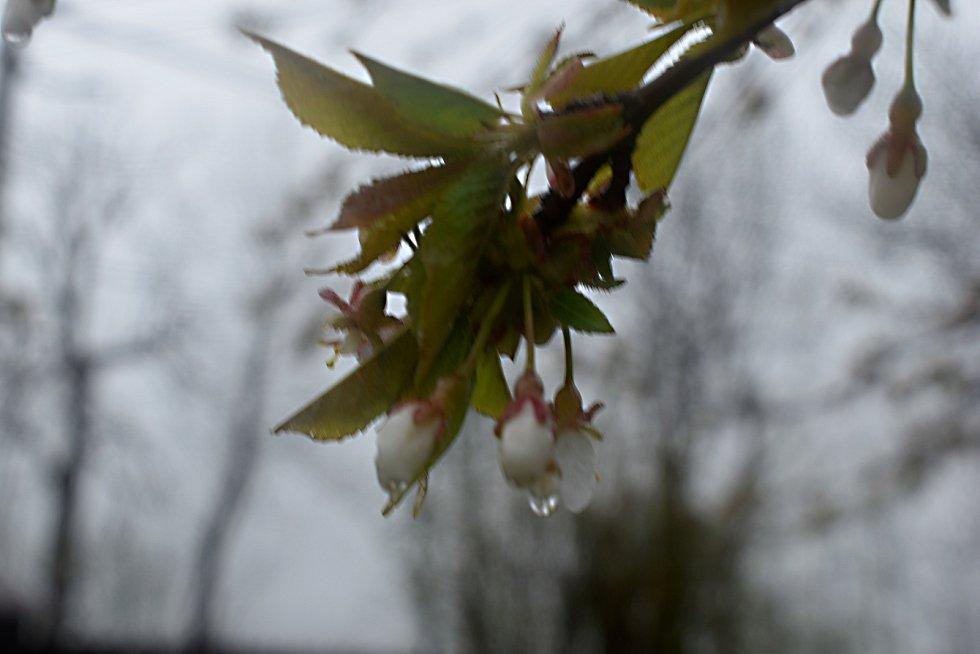 Pankrác, Servác a Bonifác s sebou letos přinesli déšť.