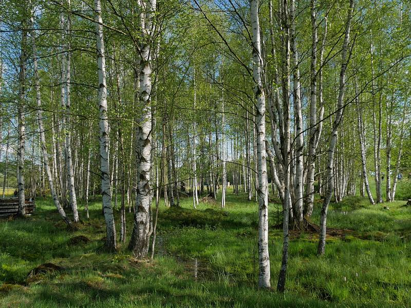Rychtářky jsou výjimečné svou rozlohou i druhovou pestrostí.