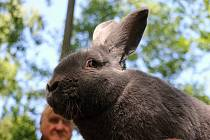 Drůbež, exotické ptactvo, králíky i rostliny mohli návštěvníci chovatelské expozice obdivovat i nakupovat.