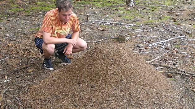 Téměř jedna miliarda mravenců pospolitých (formica polyctena) žije na území přírodního parku Šebeň nedaleko Velkého Meziříčí.