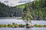 Unikátní solitér, rostoucí na skalnatém výběžku u Vírské přehrady, je pro svůj netipický vzhled často nazýván chudobínskou bonsají.