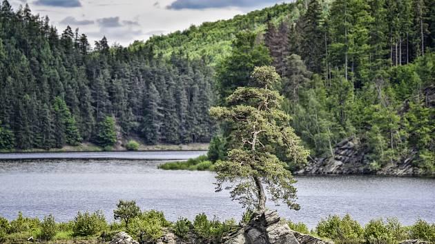 Za každý hlas pro Chudobínskou borovici zasadí dobrovolníci jeden strom