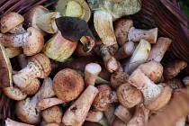 Václavky mají v kuchyni bohaté využití. Oblíbený je václavkový guláš, hodí se pod maso, do polévek i do omáček.