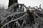 Pohyb v lesích je nebezpečný. Některé větve uvízly a hrozí pádem.