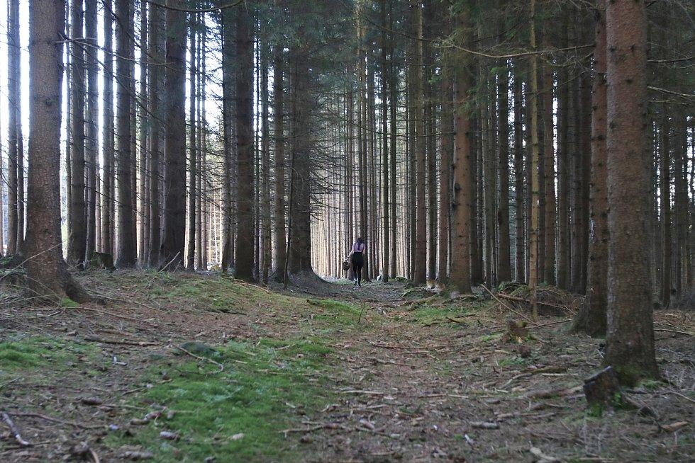 Aktuální úlovky z lesů na Vysočině.