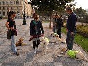 Žďár ve středu navštíví skupina nevidomých lidí se svými cvičiteli a vodícími psy v rámci letního soustředění nadace Mathilda.
