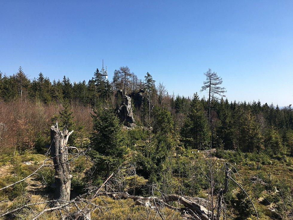 Les okolom Pohledecké skály zmizel.