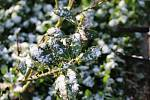 S Pankrácem přišel sníh.