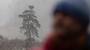 Treehunter miluje stromy, do sbírky si přidal i Chudobínskou borovici