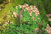 Lesy jsou plné hub.