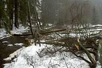 Vysoké pařezy a stromy popadané ve vodě ukazují, že se kácení ujal velký neodborník. A přestože se domy nacházejí v těsné blízkosti těžby, vyšetřování bylo zatím neúspěšné. Nikdo nikoho konkrétního neviděl ani neslyšel.