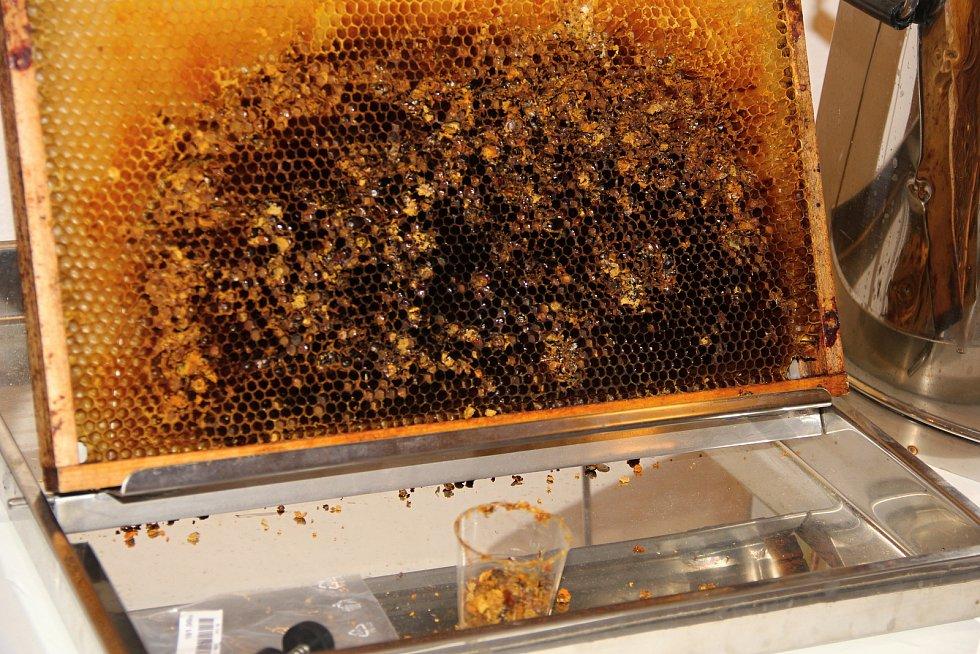 Po celý týden mohou lidé obdivovat a nakupovat produkty od novoměstských včelařů.