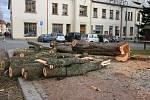 Do kmenů stromů se zakously motorové pily.