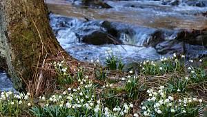 Údolí Chlébského potoka se odělo do bílé.