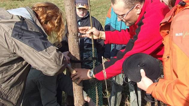 Sázet nové stromořadí se vydali lidé v sobotu k Rokytnu u Nového Města na Moravě. U zdější turistické stezky vyroste alej listnatých stromů.