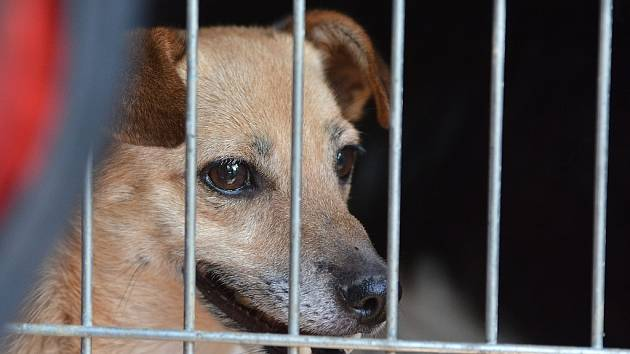 Z útulku ve Žďáře byli psi kvůli špatným podmínkám již odvezeni.