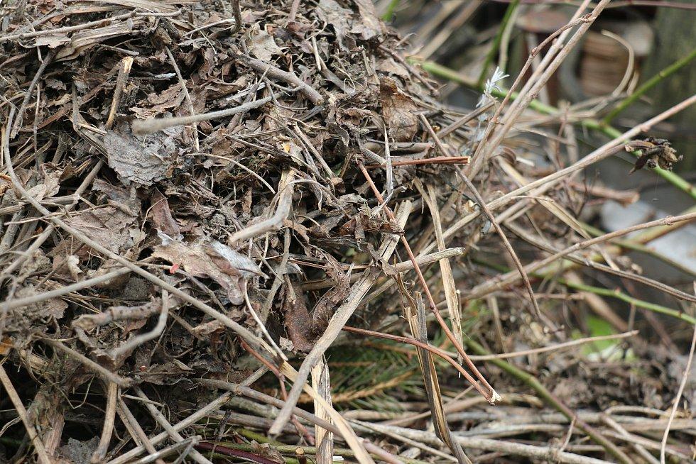 Do sběrných nádob na biodpad by lidé měli ukládat listí, trávu, seno, slámu, plevel, zbytky rostlin, kousky větví, keřů, i stromů, které by měly být posekané nebo nastříhané na menší části.