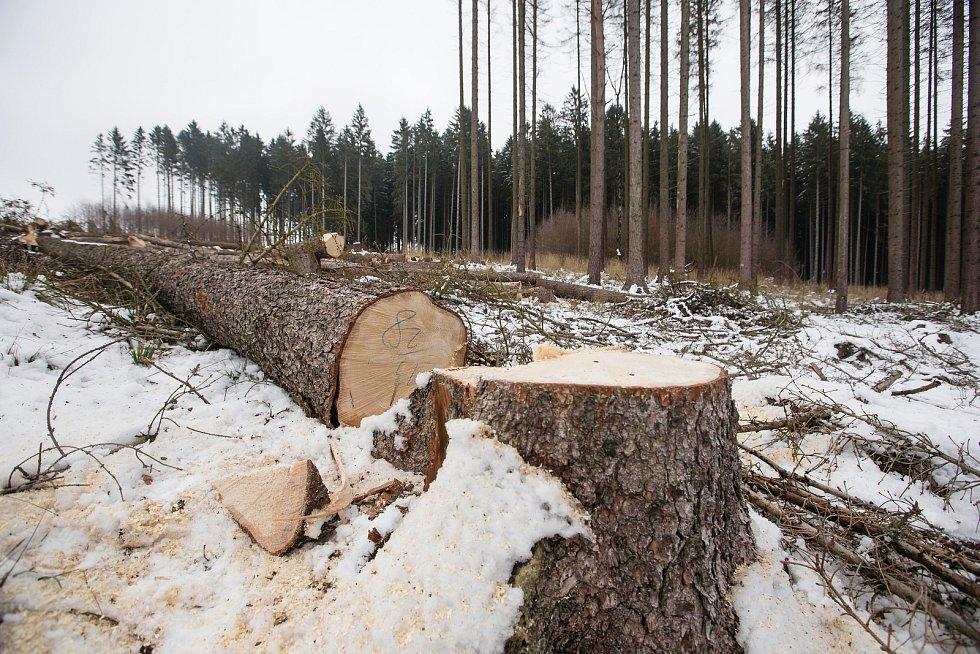 Kvůli kůrovcové kalamitě z lesů mizí i turistické značky.