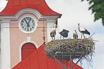 Život ptačí rodiny sledují díky webkameře obyvatelé Nového Veselí. Kamera tam funguje již přes deset let. Radnice ji pro lepší obraz nechává vždy na jaře čistit .