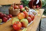 Den jablek, jimž byla věnována hlavní část Ovocné výstavy, v novoměstském Horáckém muzeu.