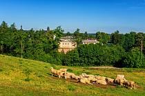 Pohled na zámek Žďár nad Sázavou s ovcemi