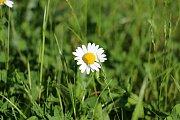 Květinové loučky jsou plné rozkvetlých rostlin, zejména kopretin.