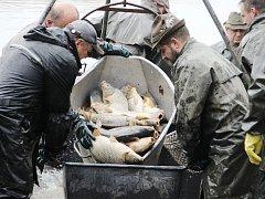 Jen pár stovek metrů od centra největšího města Žďárska natáhli síť rybáři. Ve Žďáře nad Sázavou vylovili městský Horní rybník.
