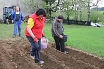 Jednotlivé odrůdy jsou od sebe přesně odděleny. Každý hospodář má už dopředu naplánováno, na kterém místě každá z nich bude.