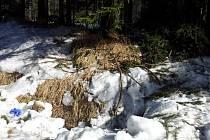 Na kraji lesa nedaleko Počítek na Žďársku našel lesník v pondělí ráno zavražděnou ženu. Ležela pod větvemi.