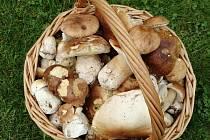 V okolí Moravce houby rostou.