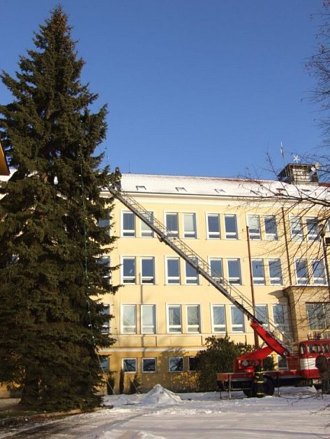 Žďárský smrk patři k českým vánočním rekordmanům.