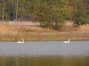 Krásy Vetelských rybníků a jejich okolí turistům přiblíží nová naučná stezka.