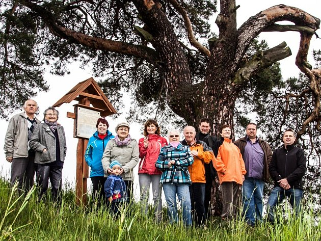 Strom stojící osaměle u polní cesty má zajímavý tvar. Kvůli chybějící velké větvi je nesymetrický.