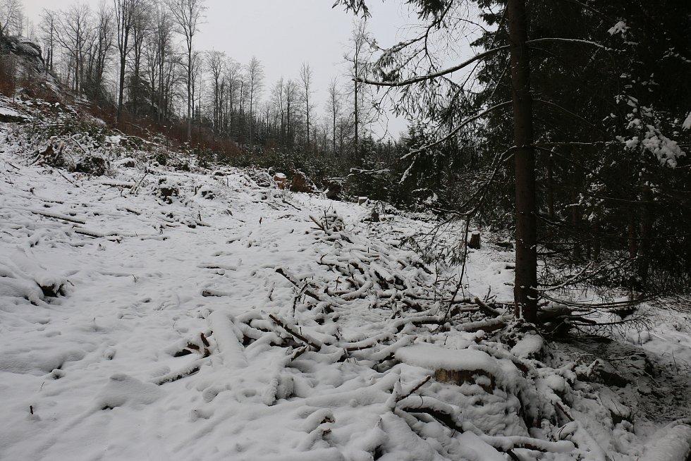 Vykácené stromy, paseky, mizející turistické značení i tabulky terénní záchranné služby má na svědomí lýkožrout smrkový.
