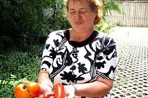 Taková rajčata pěstuje Věnceslava Naďová ve Velence.