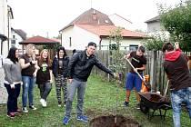 V domově mládeže Jitřenka sázeli hrušku s Láďou Hruškou, v Kubových sadech studenti hotelovky javor se starostou Ladislavem Langrem.