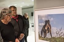 Velkoformátové snímky zubrů, divokých koní a zpětně šlechtěných praturů z rezervace, která se nachází v bývalém vojenském prostoru mezi Milovicemi a Benátkami nad Jizerou, přibližuje nová výstava v centru Prahy, ve výstavních prostorách  České spořitelny