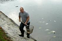 Na Labi mezi Poděbrady a Nymburkem došlo k úhynu ryb