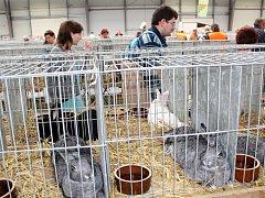 Na lyském výstavišti byli k vidění králíci, holubi i drůbež.