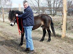 Pastviny i pro divoké koně se u Milovic rozšiřují.
