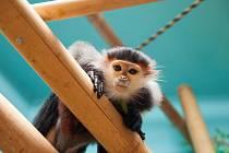 Zoo Chleby slaví o víkendu 20. výročí založení, Mezinárodní den dětí a Mezinárodní den her.