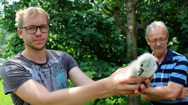 Mládě, které odvezli zaměstnanci Stanice pro zraněné živočichy a jehož prognóza není dobrá.