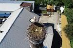 Čapí samice s mláďaty na hořátevském komíně.