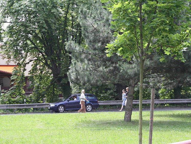 Na 180 stromů a keřů bude v Nymburce vykáceno