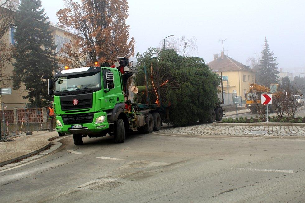 Letošní vánoční strom je krásně tvarovaný a váží 1 600 kilogramů.