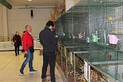 Na populární výstavě Chovatel v Lysé si příchozí přišli na své.